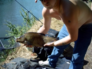 River Thames bream picture